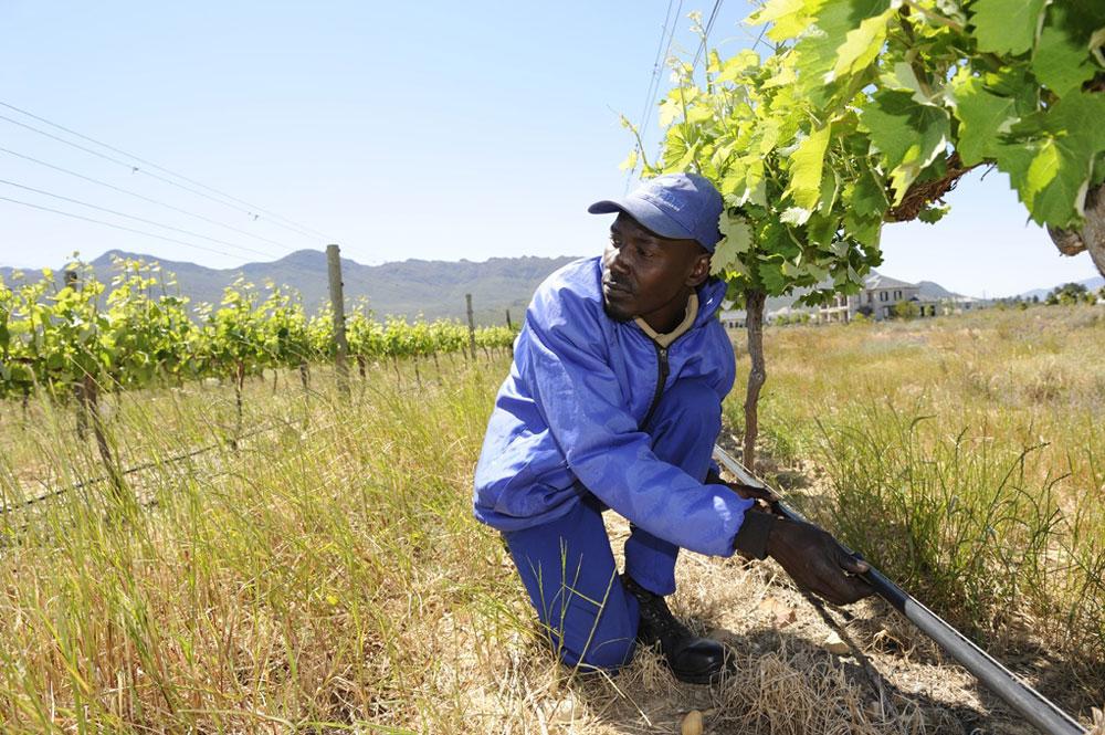 TMI Commercial Irrigation - Turfmanzi Irrigation