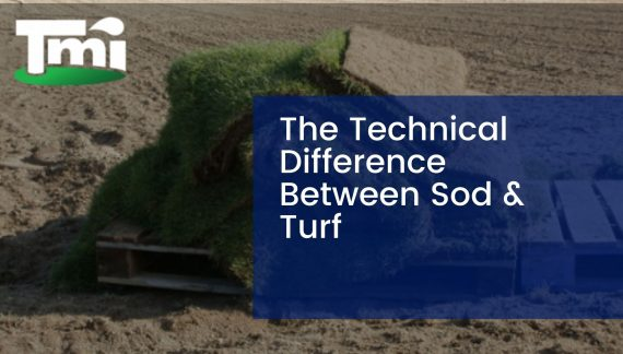 The Technical Difference Between Sod & Turf