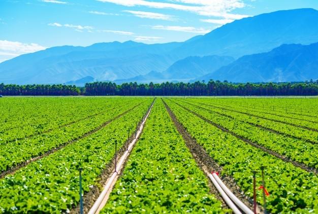 Turfmanzi Irrigation Solutions